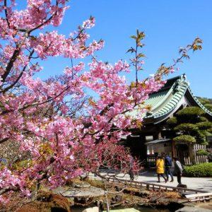 *2019年桜*<BR>お花見デートオススメプラン【鎌倉ver】