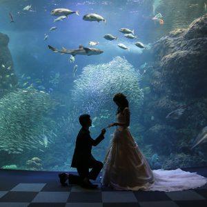 ◆江ノ島水族館で大人デートプラン◆<BR>えのすいウェディングも!