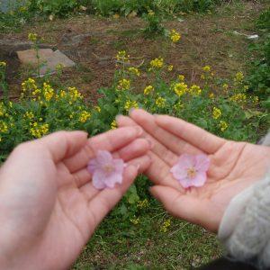 早咲きの桜で春を先取り!<BR>充実の*河津桜デート*プラン