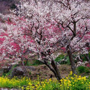 *春の湯河原デート*<BR>湯河原の魅力再発見♡